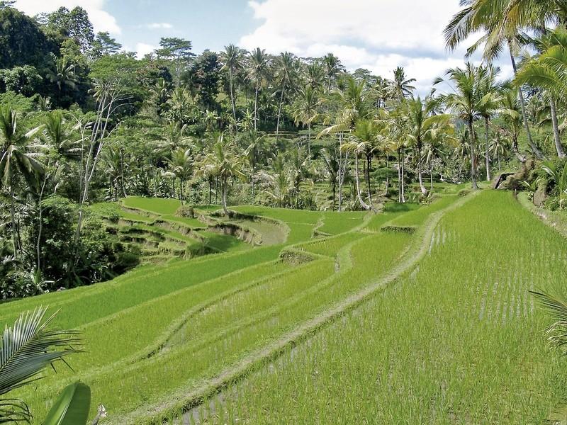 Bali Exklusiv