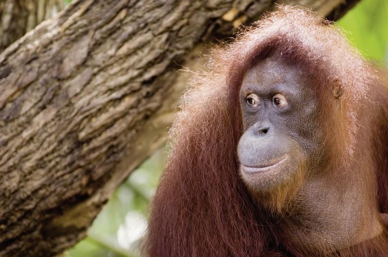 Sumatra hautnah