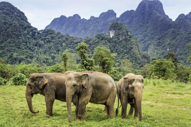 Khao Sok Dschungel-Safari