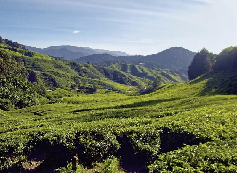 Naturerlebnis Cameron Highlands